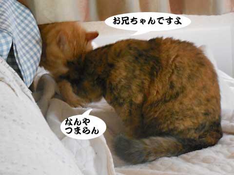 16_04_29_4.jpg
