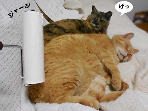 16_05_01_1.jpg