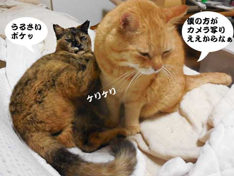 16_05_03_3.jpg