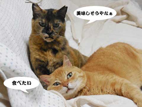 16_05_21_1.jpg