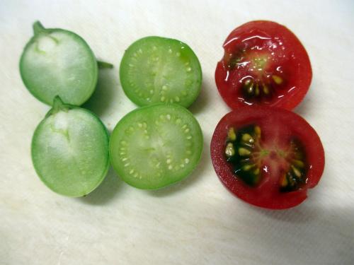ジャガイモトマト