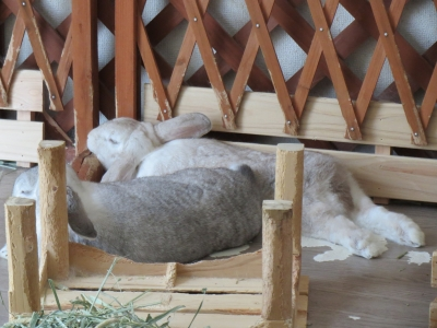 ウサギらしくないウサギ
