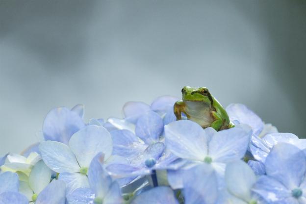 紫陽花と・・・