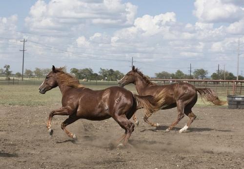 【競馬】一口馬主のクラブってどこがオススメ?