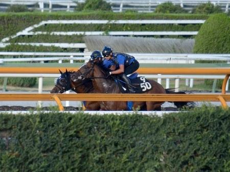 【新潟記念】ベルーフと田辺終了のお知らせ:池江「直線だけに賭ける競馬がいい」