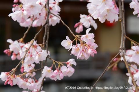 2016年_春の京都