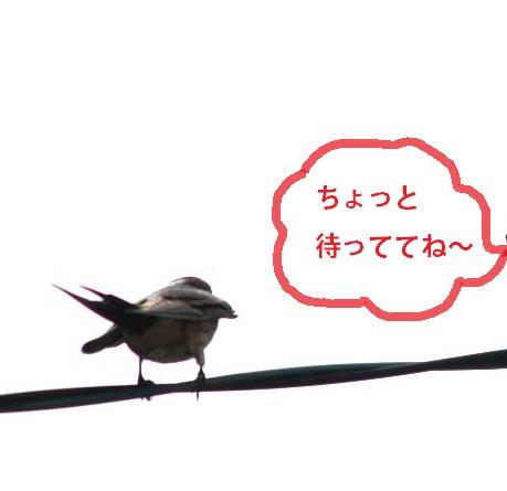 IMG_4246.jpg