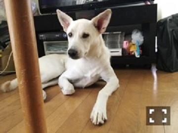 犬 カイ2