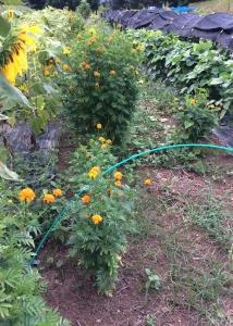 雑草がいっぱい