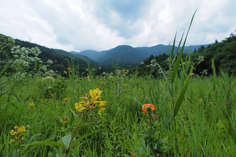 kusaredama_003-m.jpg