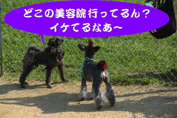 IMG_0165_convert_20160430191806.jpg