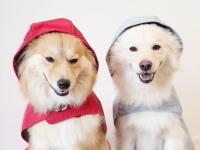 デロリアンズ犬用レインコート