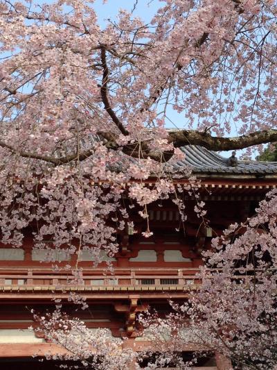 桜とビールとお菓子