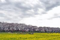 gongendo-park-111593_640.jpg