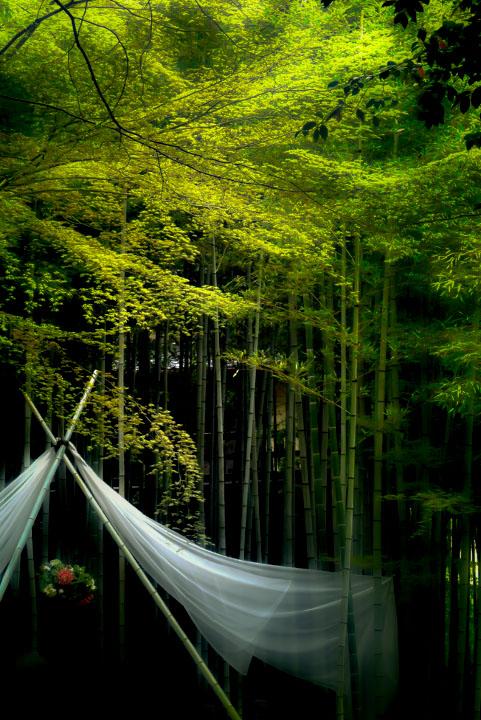 竹林と新緑
