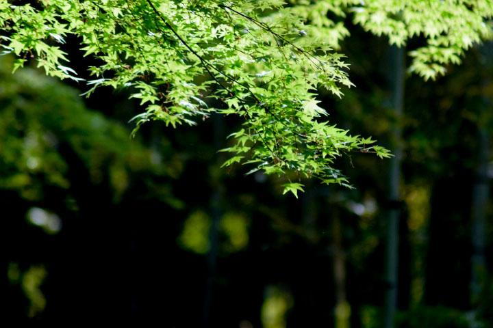 新緑と竹林