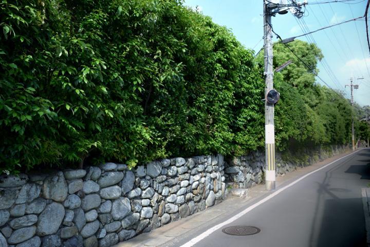アゼクラの街路樹