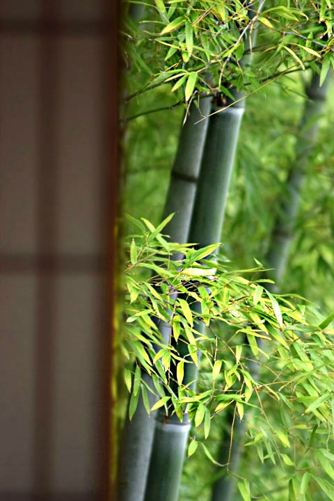 翠風閣と竹