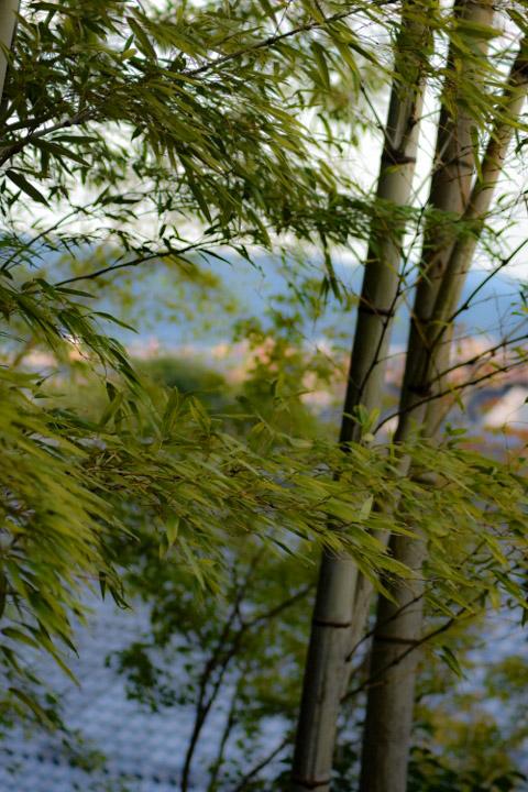 竹林と大文字