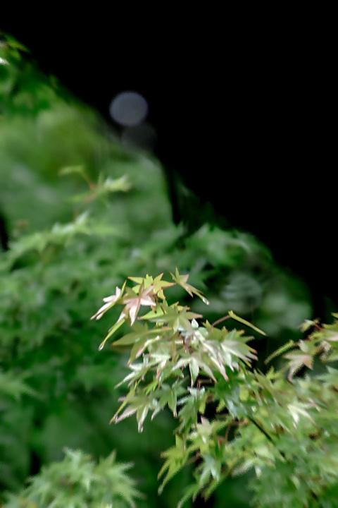 愛染倉の庭に雨