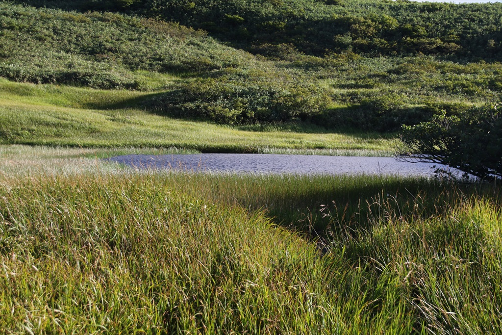 ここからは池塘がたくさんあった_5