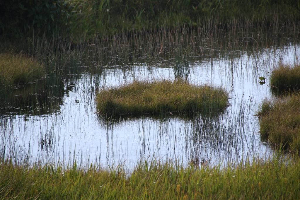 ここからは池塘がたくさんあった_8