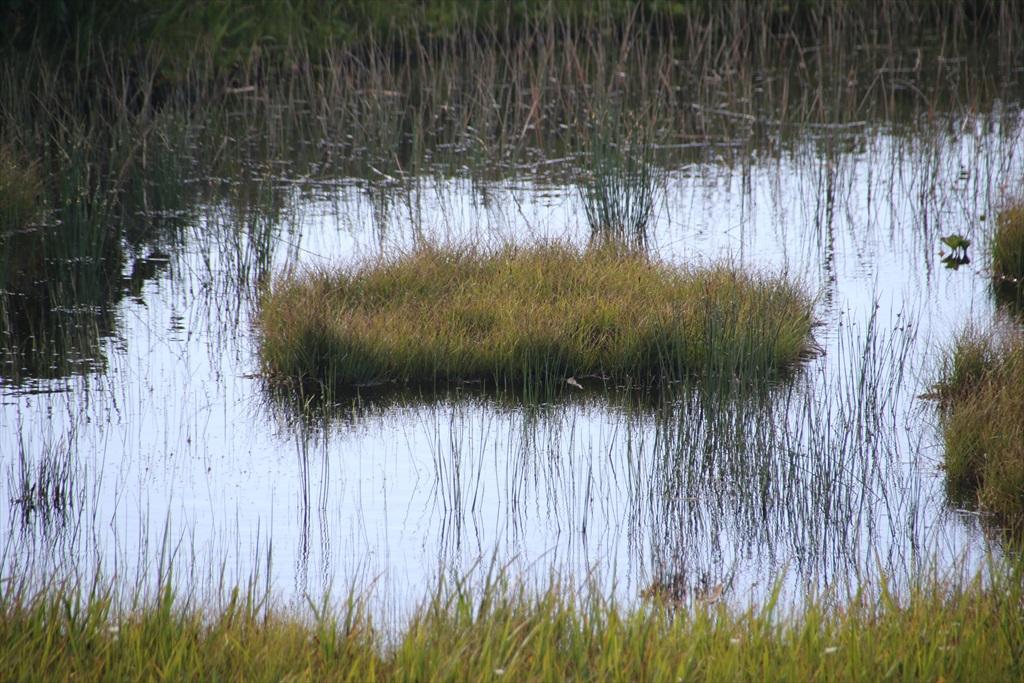 ここからは池塘がたくさんあった_9