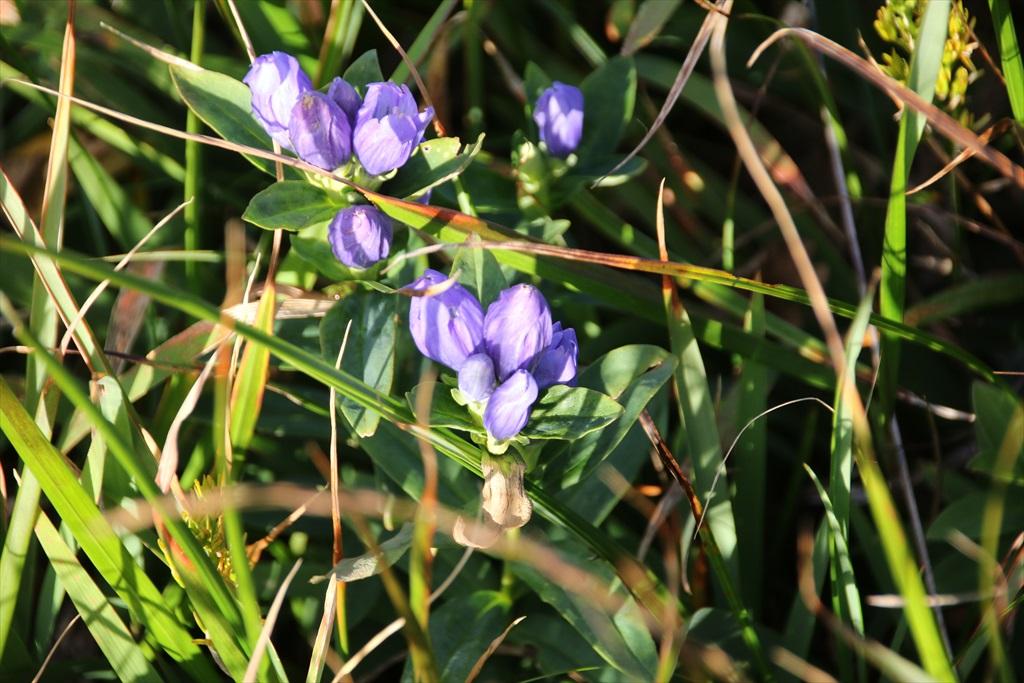 他の花さんたち_3