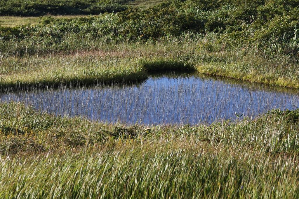 まだまだ池塘がある_2