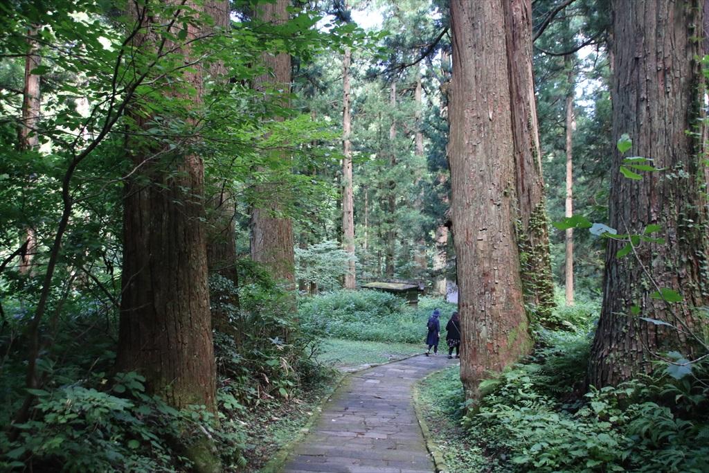 一の坂から爺杉方面へ戻る道_2