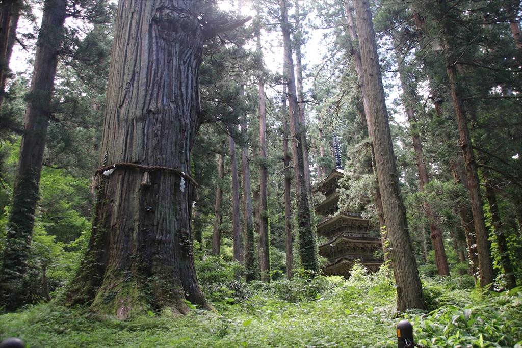 杉木立の間から、国宝五重塔が見える_2