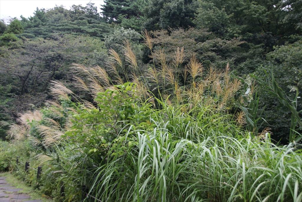 小さな沼及びその周辺は繁茂が盛りを迎えていた_3