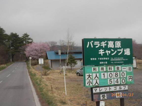 バラギ高原の桜