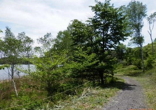 バラギ湖遊歩道 no1