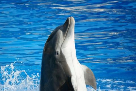 2489093451-bottlenose-dolphin-58393_1920-qxry-480x320-MM-100.jpg