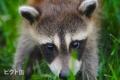 685709324-animal-690159-wyr-480x320-MM-100.jpg