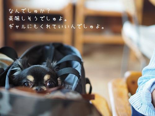 P9030081.jpg