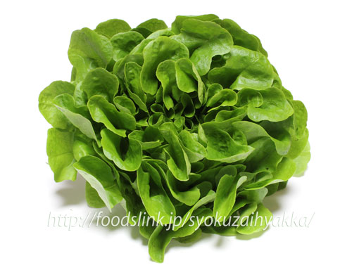 lettuce-Salan06.jpg