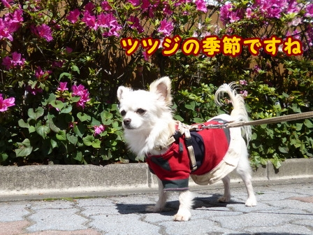 blog7508a.jpg