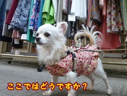 blog7602a.jpg