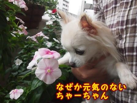 blog8411a.jpg