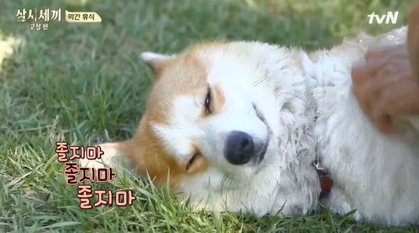 キョウリ 三食ごはんコチャン編