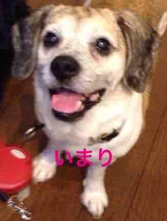 fc2blog_20160516143846bb4.jpg