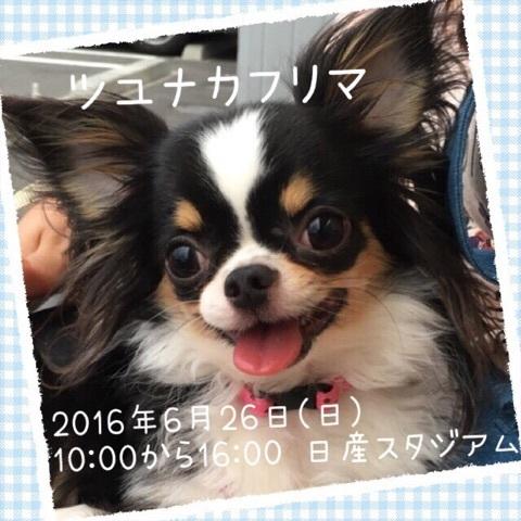 2016062021062508a.jpg