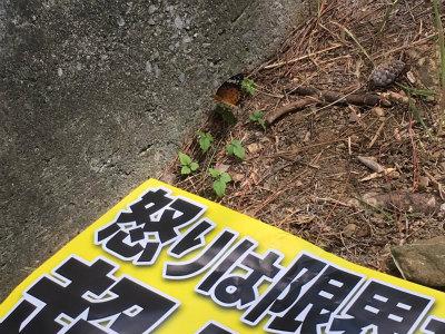 ClSopn1UoAEsZot20160619 Okinawa