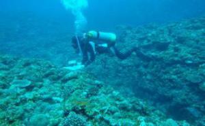 img_2b16c4b7e6辺野古サンゴ移植認めず