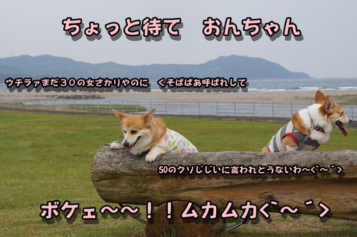 DSC01680_20160425163501968.jpg