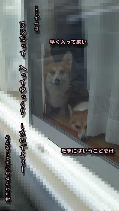 DSC_0347.jpg