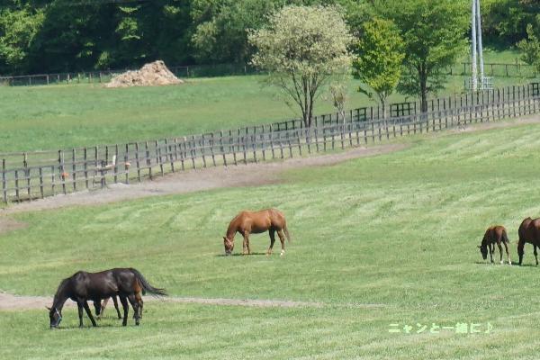 馬の居る風景