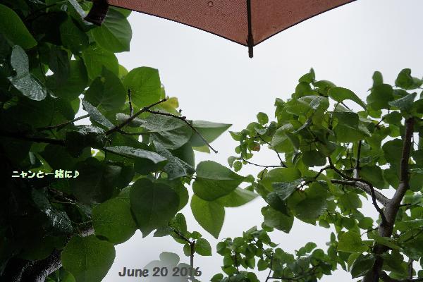 傘&ニャン♪
